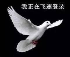 杭州家教胡教员